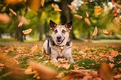 pet pet photography Australiaphotography Australia
